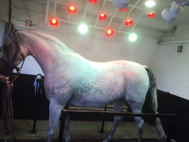 Weinsberger adjustable horse solarium with infa red and sun lamps